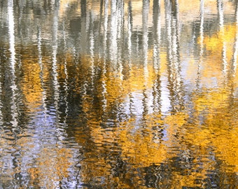 Aspen Trees Reflection Golden Fall Colorado Autumn Aspen Forest Leaves Wavy Rustic Cabin Lodge Photograph