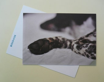 Photo postcard from minnievoss, offset printing, analog photography, dog