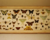 High Prairie Insect Collection a.