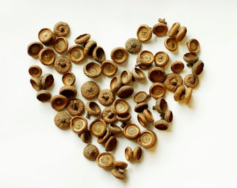 20 Natural Acorn Caps, Real Acorn Tops, Floral preform for crafts, Natural Home decor , Florist crafts.