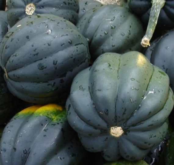 40 squash seeds table queen acorn heirloom for Table queen squash