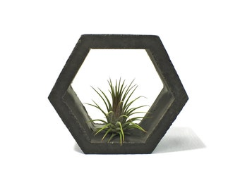 Concrete Hexagon Air Plant Holder
