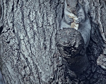 Squirrel, Fall Photography, Outdoor Photography, Autumn, Nature Photography, Fall