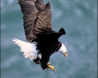 24x36 Poster; Bald Eagle