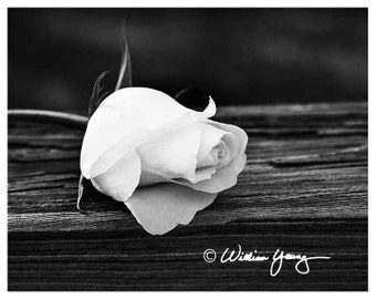 Rose in Black and White (5719), Fine Art Photography, Black and White, Rose, Rose Photo, White Rose Photo, Floral Photography, Flower Photo