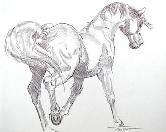 "Equine art: ""Spirit"" original pen and ink drawing 9""x11"""