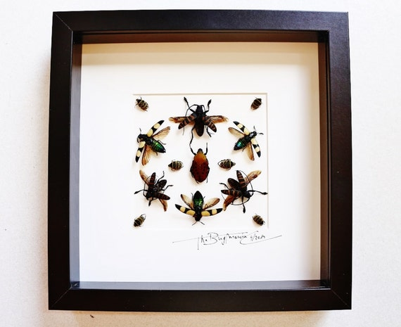 Artframe with real insects : Topquality display with fantasy of  african beetle , real insects , framed art , FREE SHIPPING