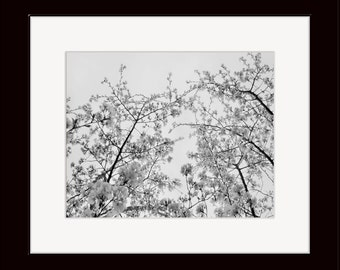 5 X 7 Matted Cherry Tree Photograph, Black and White