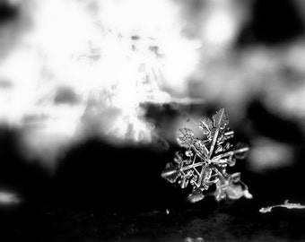 """A Frozen Winter Photo: """"Tiny Triangle Snowflake""""  A Photographic Print of a Real Snowflake (Available in Multiple Sizes)"""