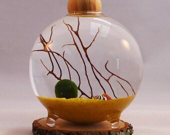 "Marimo Terrarium / Aquatic Living Moss Ball / Home Decor / Choice Of Sand/Pebble Color / 3"" Glass Bubble Ball Vase"