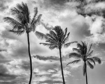 Palms, Maui, Hawaii
