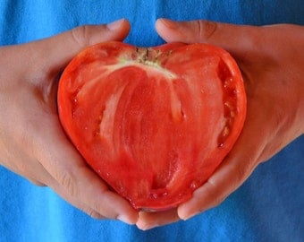 Bulgarian bull's heart tomato,beefsteak tomato heirloom seeds