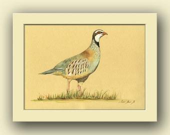 Red Legged Partridge - bird wildlife animal decor- bird animal wall art -partridge- Original watercolor painting- Juan Bosco