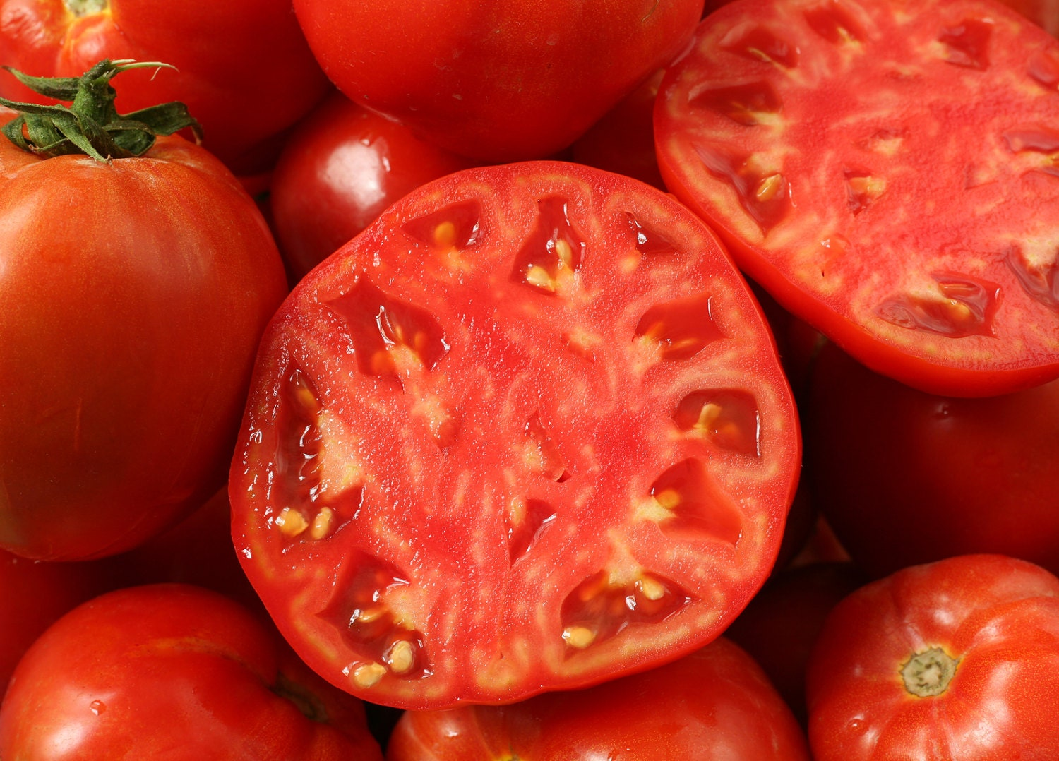 ace 55 tomato review