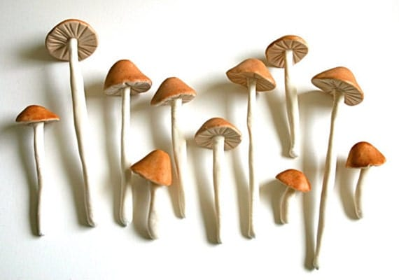 Growing an eco friendly business - Wild mushrooms business ideas ...