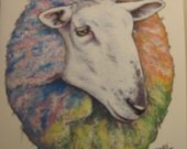 Border Leicester Sheep Blank Notecards 8PC Hand Drawn by Lucy Tyler