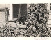 vintage photo Prairie Family Anderson Ranch Euripedes the Cat Drinks Milk on Porch 1911