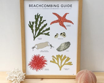 Beachcombing Guide print - coastal wildlife illustrated poster - beach combing / seaside / nature - wall art