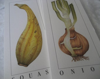 Set of 8 VINTAGE Litho Squash & Onion Vegetable Prints Note Cards to Frame or Collage