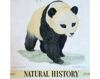 Natural History Magazine cover, June 1938 w. giant panda