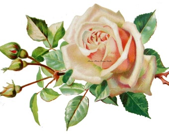 Shabby Vintage Chic Victorian Postcard Klein Collection Beautiful Lush Pink Single Rose Digital Download Images - rose3