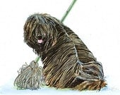 PULI MOP Original Watercolor on Ink Print Matted 11x14 Ready to Frame