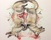 Original Bat Eared Fox drawing watercolor