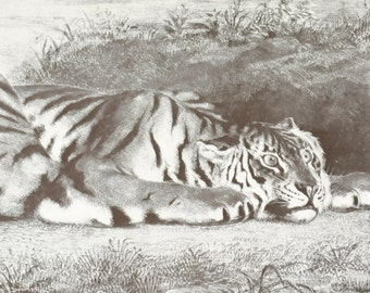 Ferocious Tiger book print, by Delacroix
