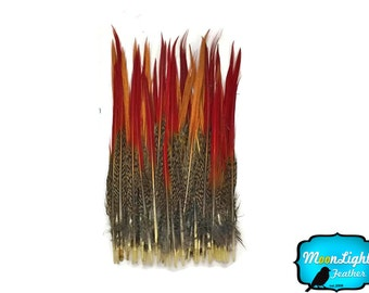 """Pheasant feathers, 10 Pieces- 6-8"""" Golden Pheasant Red Tips Loose Feathers : 3657"""