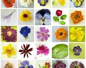 Gift Wrap, Dry Flower, Gift Wrapping, Designer, Bridal Shower, Wrapping Paper, Paper, Craft Supply, Scrapbook, Pansy, Violas, Wedding, Daisy