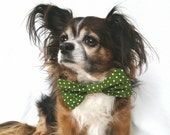 Pet Dog bowtie Green and White Polka Dot clip on size large