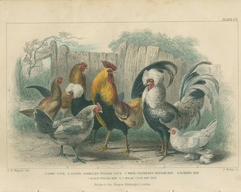 1870 Goldsmith, Game Cock, 53, Silver Spangled Cock, White Feathered Bantam, Dorking, Black, Malay Hen, Hand Colored  Engraving