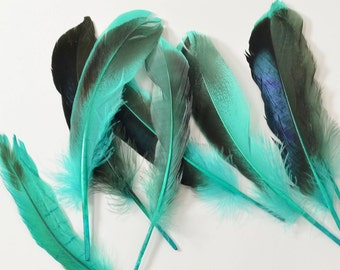 Mallard Feathers, Iridescent Green Wing - Teal (10pcs) : M09