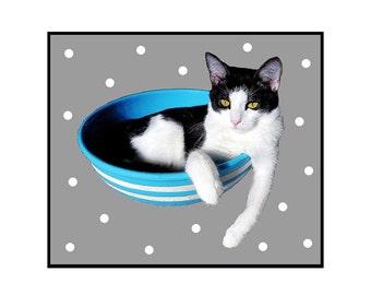 Cat Photo Card Black and White Cat in the Blue and White Bowl