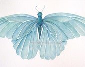turquoise blue butterfly archival print of watercolor painting