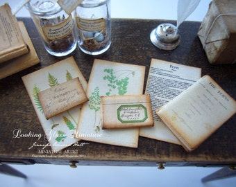 Miniature Fern Collection for Dollhouse 1/12 Scale