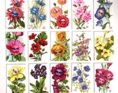 The Garden of Talking Flowers Collection  - complete set of 15 ATC Mini Alice in Wonderland Prints by Mab Graves - unframed - open edition