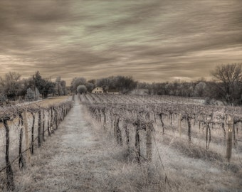 Augusta Winery infrared photo, wineries, vineyard, Missouri wine, wine home decor, wine country, fine art photography, grape growing