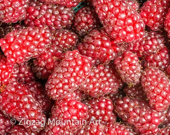 Tayberry art for kitchen.  Fruit wall art or kitchen wall art from food photography.  Fine art print for kitchen decor or wall art.