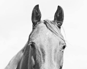 Monochromatic Photography, Light Horse Photograph, Equestrian Art