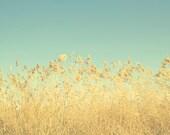 DREAMING GOLD, blue, sky, golden grass, landscape, yellow, home decor, fine art photograph