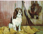 English Spaniel Hunting Dog and Pheasants - Dog Portrait Postcard