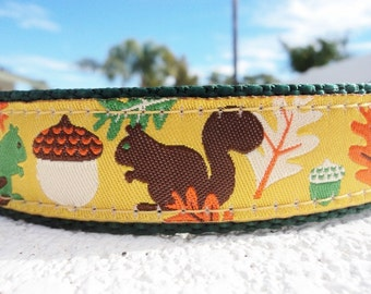 "Dog Collar Squirrel Nut Gold 1"" wide Quick Release adjustable - upgrade to martingale - see details for sizing etc"