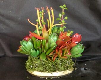 Living Succulent a la Ceramic