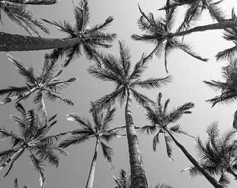 "BW Palms, Palm Tree Photography, Island Decor, Black And White Photography Prints, Bold, Gray, Palm Tree Decor ""BW Palms"""