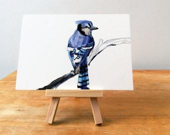 Blue Jay Print, Bird Illustration, Digital Drawing, Animal Wildlife Art Postcard  BJ1