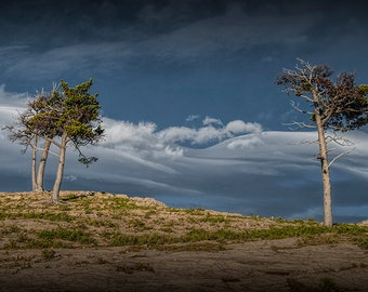 Glacier National Park Trees on a Rocky Ridge with Wind Swept Clouds by Lake Sherburne in Montana No.1719 - A Fine Art Landscape Photograph