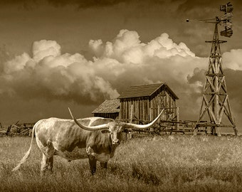 Longhorn Steer in Sepia by a Windmill and Old Gray Wooden Barn on the Prairie in South Dakota No.SP81172 A Western Animal Photograph