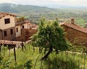 Tuscany Photography - Italy Photography - Tuscan Wall Art - Italian Decor - Green and Brown - Tree Photograph - Tree Print - Landscape Photo