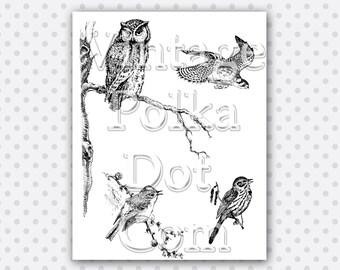 Clip Art Birds Collage Owl Hawk Wild Birds Branch Vintage Clipart Printable Digital Instant Download Scrapbooking Nature Woodland